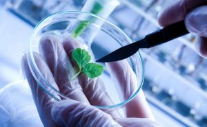 Close up of biologist's hand with protective gloves holding young plant with root above microscope glass.
